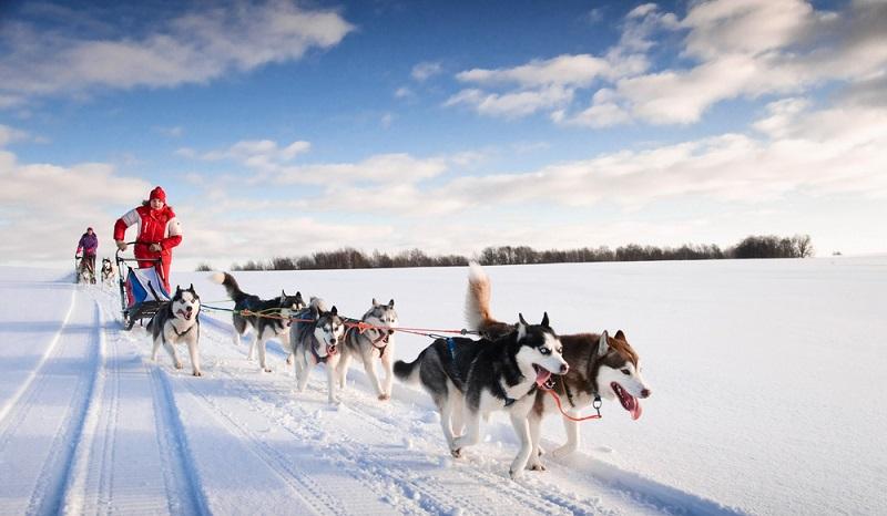 Aktivurlaub ist in. In der Auvergne kann man inzwischen auch mit dem Hundeschlitten aufregende Touren im Schnee erleben. (#2)