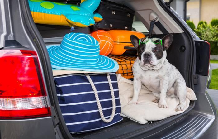 Im Auto zu verreisen ist für die Fellnase die angenehmste Art zu Reisen. (Foto: shutterstock - Patryk Kosmider)
