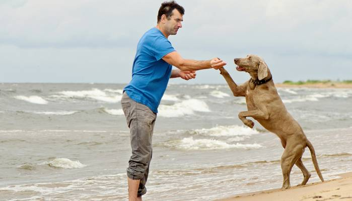 Am Strand der ostsee fühlt sich der Hund pudelwohl. (Foto: shutterstock - Tatjana Baibakova)